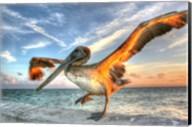 Dancing Pelican Fine-Art Print