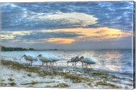 Ibis At Sunrise Fine-Art Print