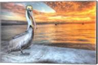 Pelican And Fire Sky Fine-Art Print