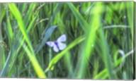 Splendor In The Grass Fine-Art Print