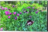 Garden Purple Tulips Fine-Art Print