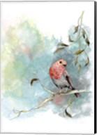 Robin's Winter Fine-Art Print