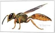 A Wasp Fine-Art Print