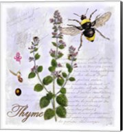 Thyme Herb Fine-Art Print