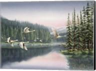 Swans At Sunrise Fine-Art Print