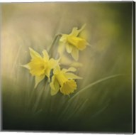 A Spring Morning Welcome Fine-Art Print