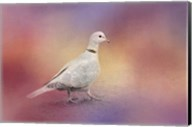 Spring Eurasian Collared Dove Fine-Art Print