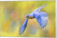 Bluebird Spring Flight Fine-Art Print