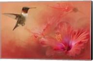 Hummingbird and Peach Hibiscus Fine-Art Print