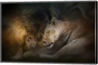 Lion Love Fine-Art Print