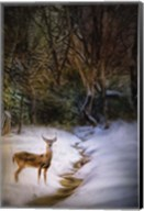 Buck At Snowy Creek Fine-Art Print