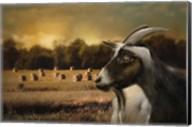 Hay Buffet Fine-Art Print