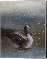 Snowy Swim Fine-Art Print