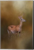 Buck In The Woods Fine-Art Print