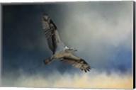 Winter Osprey Fine-Art Print