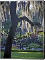 Forsyth Pk, Savannah Fine-Art Print