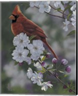 Cardinal Spring Blossoms Fine-Art Print