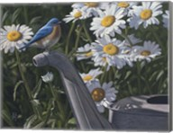 Bluebird Daisies Fine-Art Print