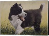 Puppy Fine-Art Print