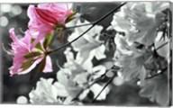 Spring Blooms II Fine-Art Print