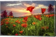 Sunrise Poppies Fine-Art Print