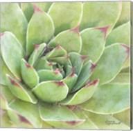 Garden Succulents IV Color Fine-Art Print