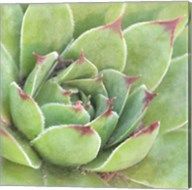 Garden Succulents IV Color Fine-Art Print