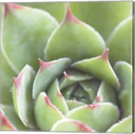 Garden Succulents III Color Fine-Art Print