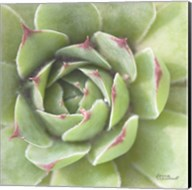 Garden Succulents II Color Fine-Art Print