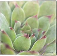 Garden Succulents I Color Fine-Art Print