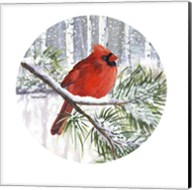 Winter Wonder Male Cardinal Fine-Art Print