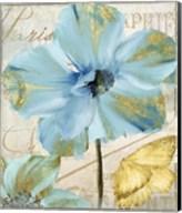 Himalayan Poppy Fine-Art Print