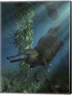 Platypus Fine-Art Print