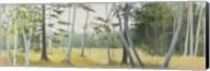 Birch Field Fine-Art Print