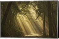 L'esprit du soleil Fine-Art Print