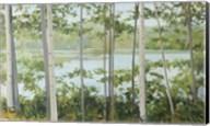 Birch Lake Fine-Art Print