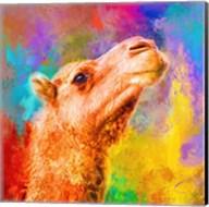 Jazzy Camel Fine-Art Print