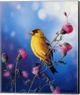 American Goldfinch Fine-Art Print