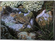 On the Rocks, Great Horned Lizard Fine-Art Print