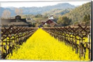 Napa Valley in Winter Fine-Art Print
