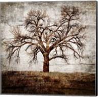 Cottonwood Tree Part 1 Fine-Art Print