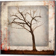 Cottonwood Tree Part 5 Fine-Art Print