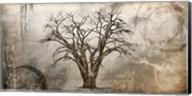 Cottonwood Tree Part 7 Fine-Art Print