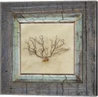 Gypsy Sea Framed 3 Fine-Art Print