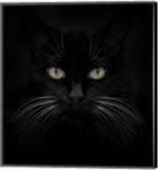 Black Cat Fine-Art Print