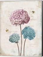Geranium Study I Pink Flower Fine-Art Print