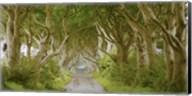 The Dark Hedges, Ireland Fine-Art Print