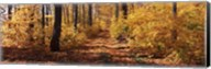 Trees in Autumn, Stowe, Lamoille County, Vermont Fine-Art Print
