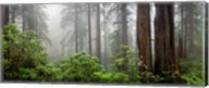 Trees in Misty Forest Fine-Art Print