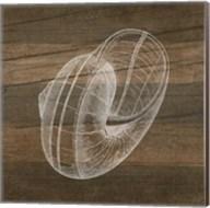 Rustic Nautilus - White Fine-Art Print